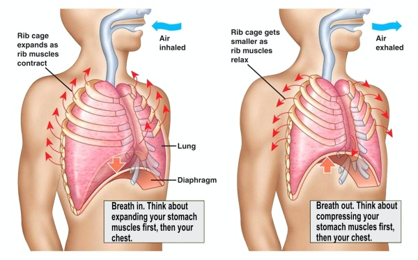 Diagram of how to use your diaphragm.